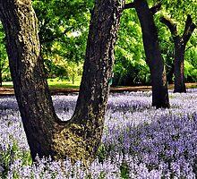 Botanical Gardens, Brooklyn, New York by fauselr