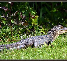MGCCC Gator by bgsigns