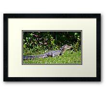 MGCCC Gator Framed Print