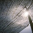 Capture The Sun - Lomo by chylng