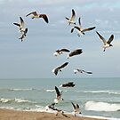 Seagulls On The Beach by Cynthia48