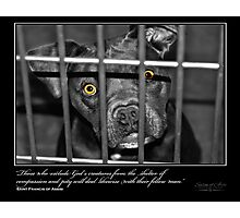 Shelter of Compassion - Stray Muses™ A Language Unspoken Photographic Print