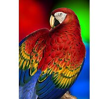 Vintage Rainbow Macaw Photographic Print