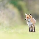 Fox on the run by Jeffrey Van Daele