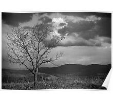 Loan Tree Poster
