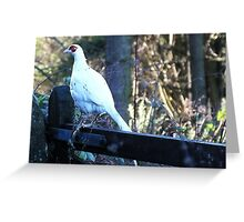 Rare Pheasant Greeting Card
