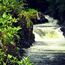 Cenarth Falls by Abbie Macmillan