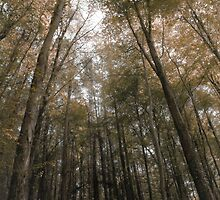 tress in the woods by Tom Smith
