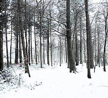 Snowscape by Tom Smith