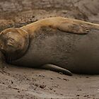 Grey Seal at Donna Nook by Jonathan Cox