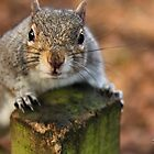 Curious Squirrel by Jonathan Cox
