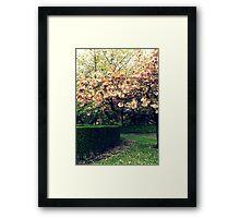 Pink Blossom Tree Framed Print