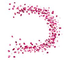 Rose Petals Circle in Pink Photographic Print