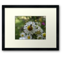 Don't sweat it Framed Print