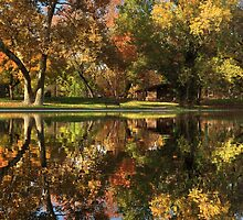 Sycamore Reflections by James Eddy