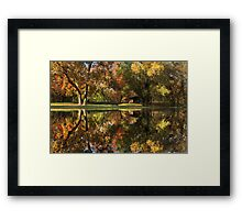 Sycamore Reflections Framed Print