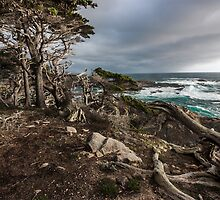 A Look at Headland Cove - Point Lobos by Richard Thelen