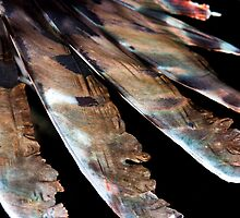 Fin Lines & Feathers by Karen Willshaw