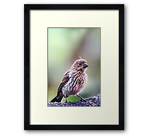Tiny Sparrow... Framed Print