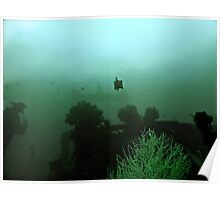 BOXFISH ON CEMENT Poster