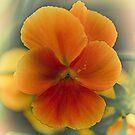 orange by Nicole W.