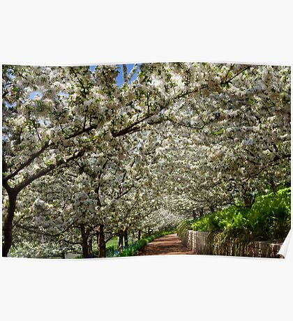 Crabapple Tunnel Poster