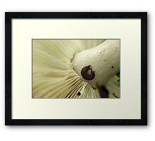Nature's Picnic Framed Print