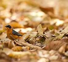 In the leaves  by Dominic  Boulding