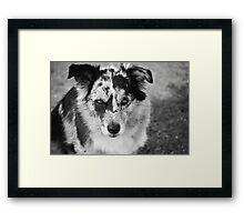 Loyal Companion Framed Print