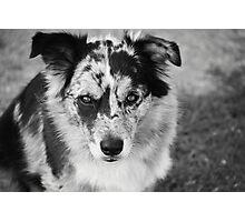 Loyal Companion Photographic Print