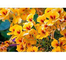 wildflowers Photographic Print