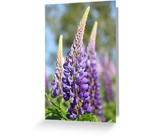 Graceful Lupins Greeting Card