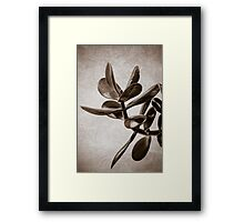 Money Plant Framed Print
