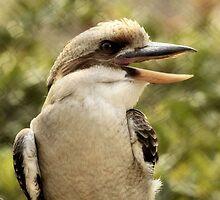 Laughing Kookaburra by SuddenJim