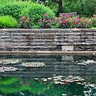 Garden at Holden Arboretum by Sheri Nye