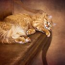 Lazy Cat On A Bench  by Diane Schuster