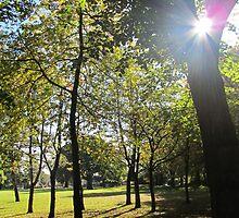 Sunny woods by ZoeKay