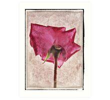Rose rendering Art Print