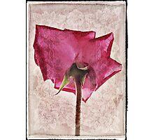 Rose rendering Photographic Print