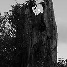 Stumppet by Adam Kuehl