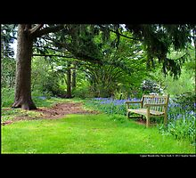 Planting Fields Arboretum State Historic Park Bench - Upper Brookville, New York by © Sophie W. Smith