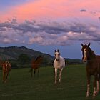 Evening on the Ranch by Barbara  Brown