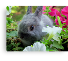 Blossoming Bunny Rabbit Canvas Print