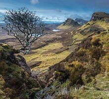 Tree on The Quairaing, Isle of Skye by Richard Youell