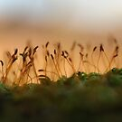 Moss growing on a branch by cuilcreations