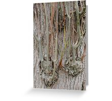 Ash sprouting extra branches Greeting Card