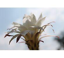 Flower of Cactus II Photographic Print