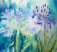 Agapanthus x 2 by Ruth S Harris