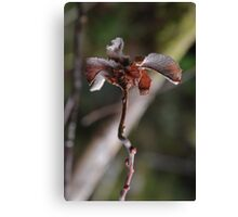 Willow Cabbage Gall, Portrait Canvas Print
