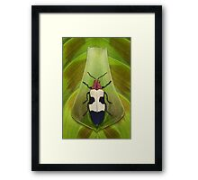 Beetle_Chrysochroa buqueti Framed Print